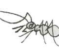 Giant Ant - Carapace