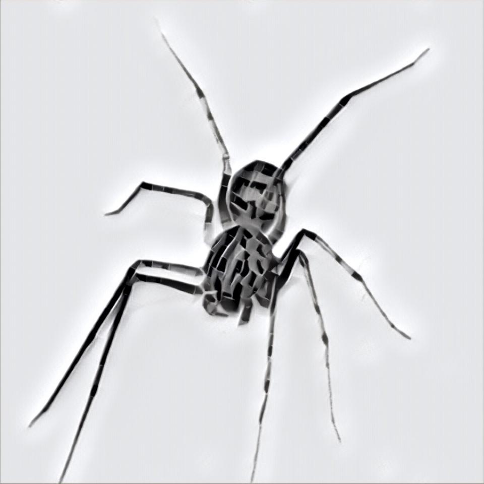 Spiders - Gobbing