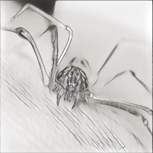 Spiders - Phase Snatching