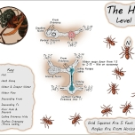 The Hive Level 1